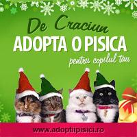 Adopta o pisica!