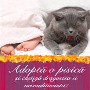 Adopta o pisica