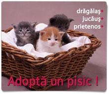 Adopta un pisic