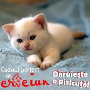 Cadou de Craciun o pisica