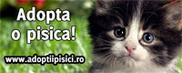 Adopta o pisica